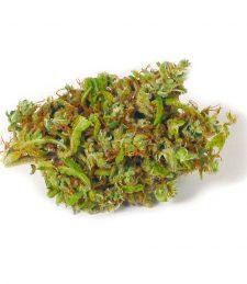 CBD Blüten Candida