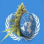WHO stuft Cannabis runter